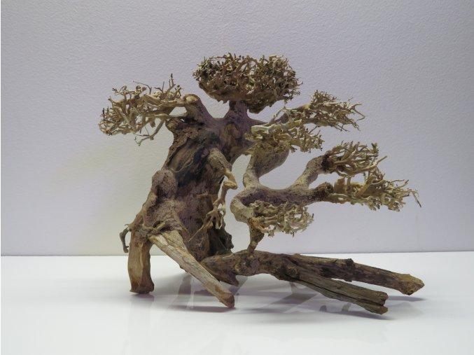 Bonsai wood M (BW40282)