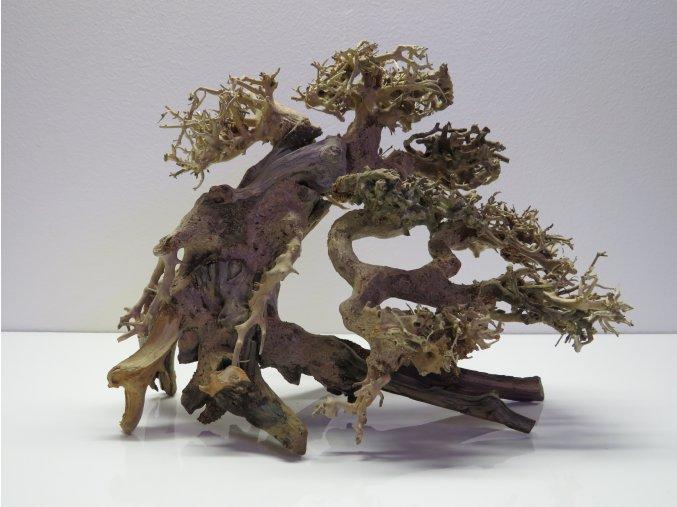 Bonsai wood M (BW40283)