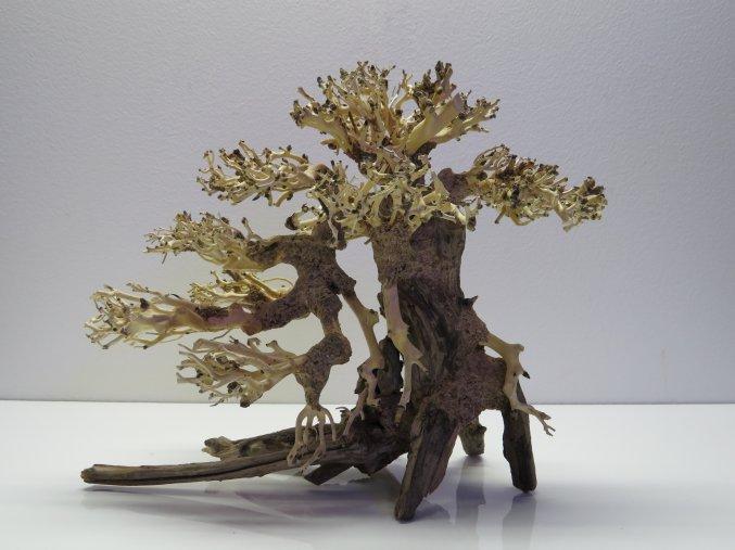 Bonsai wood M (BW40285)