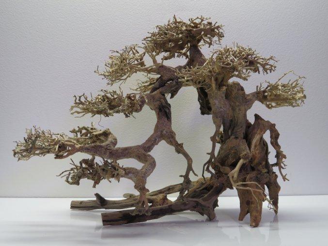 Bonsai wood L (BW40426)