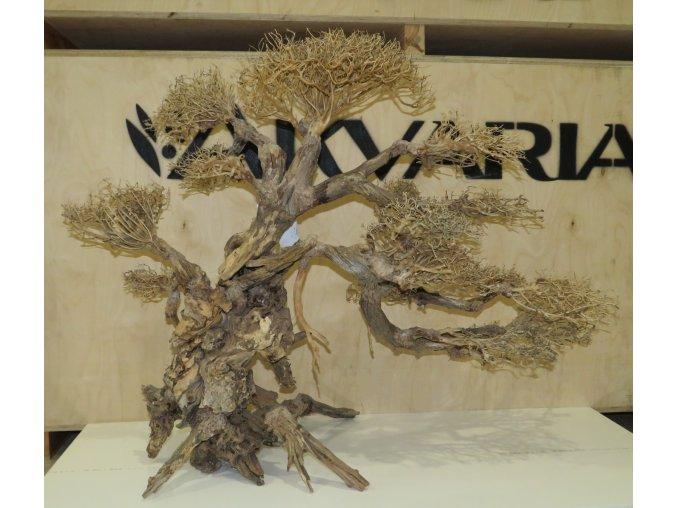 Bonsai wood XL (BW41031)