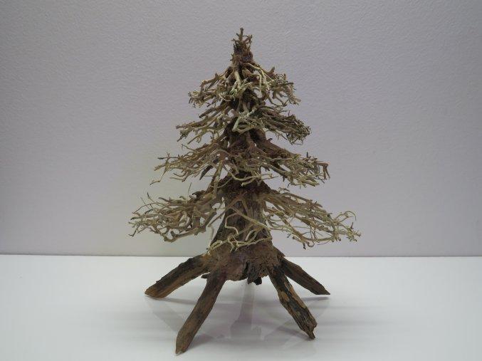 Wood forest M (WF41891)