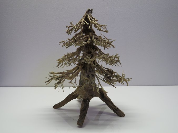 Wood forest M (WF41894)
