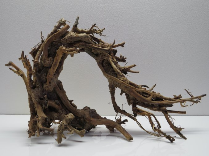 Wood dragon S (WD42192)