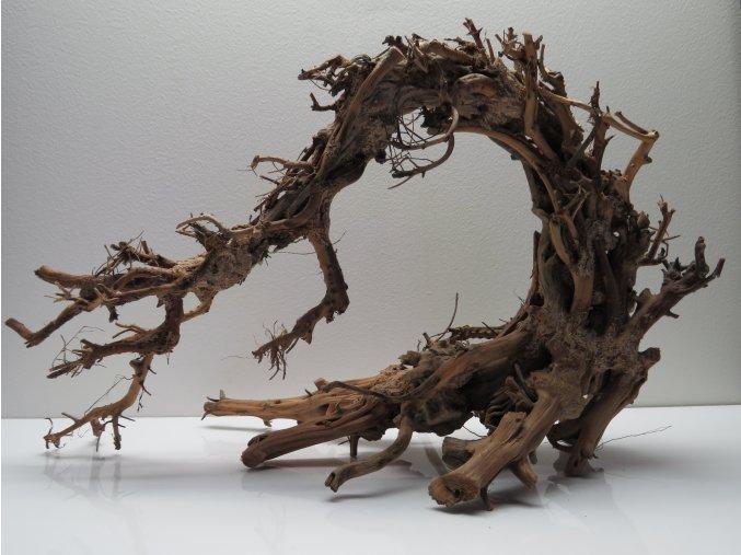 Wood dragon M (WD42263)
