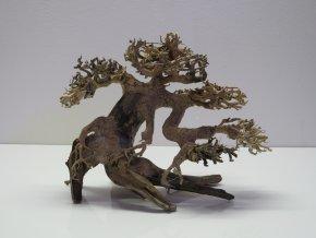 Bonsai wood S (BW35815)