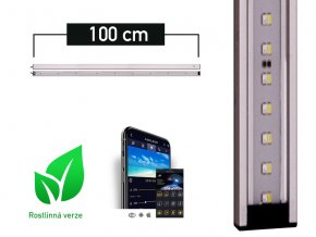 LANCIA1 plant 100