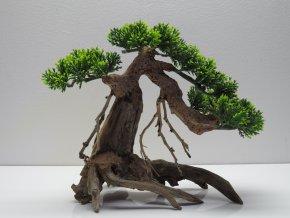 Bonsai green M (BG41411)