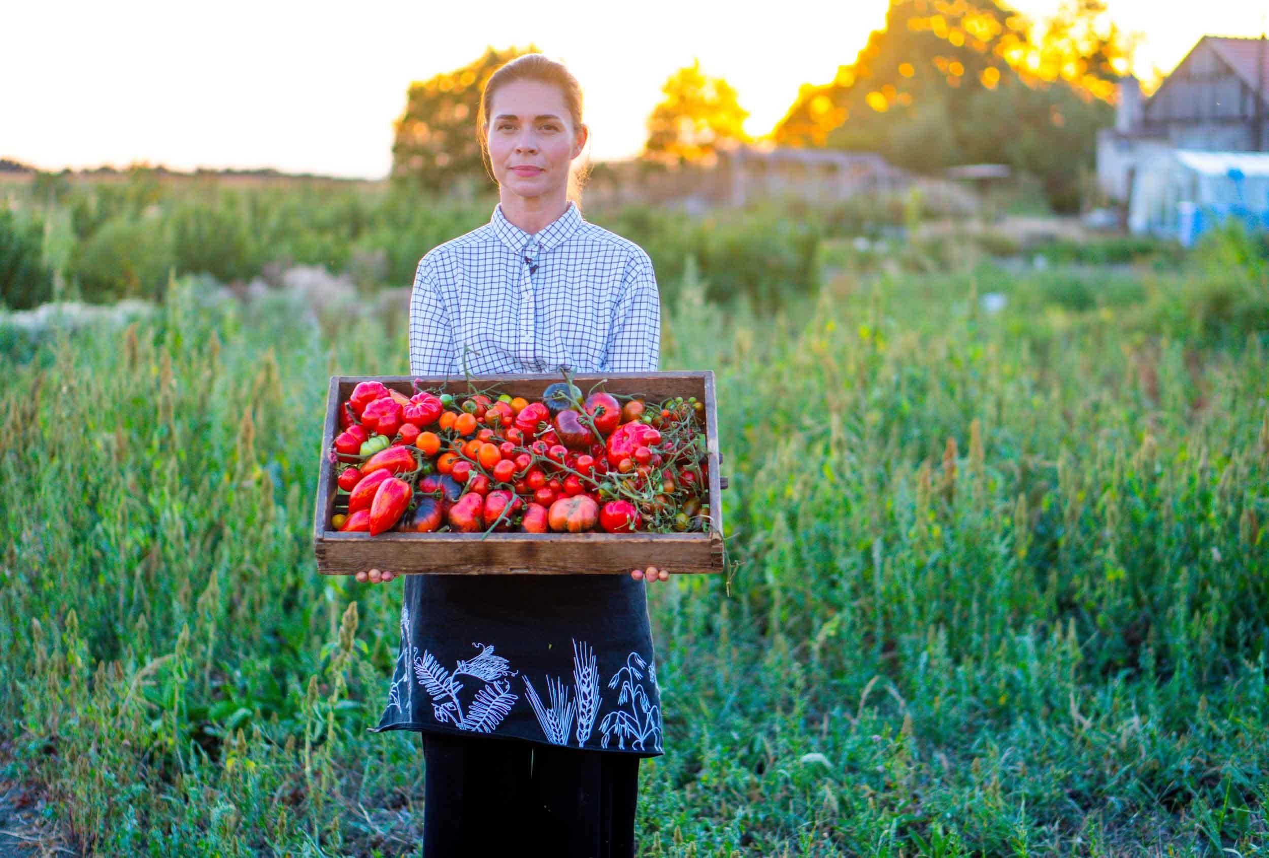 Rajče od semínka po šťavnaté plody