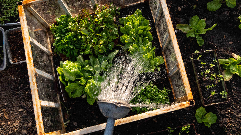 Pařeniště, skleník a fóliovník – víte, jak a pro co je používat?