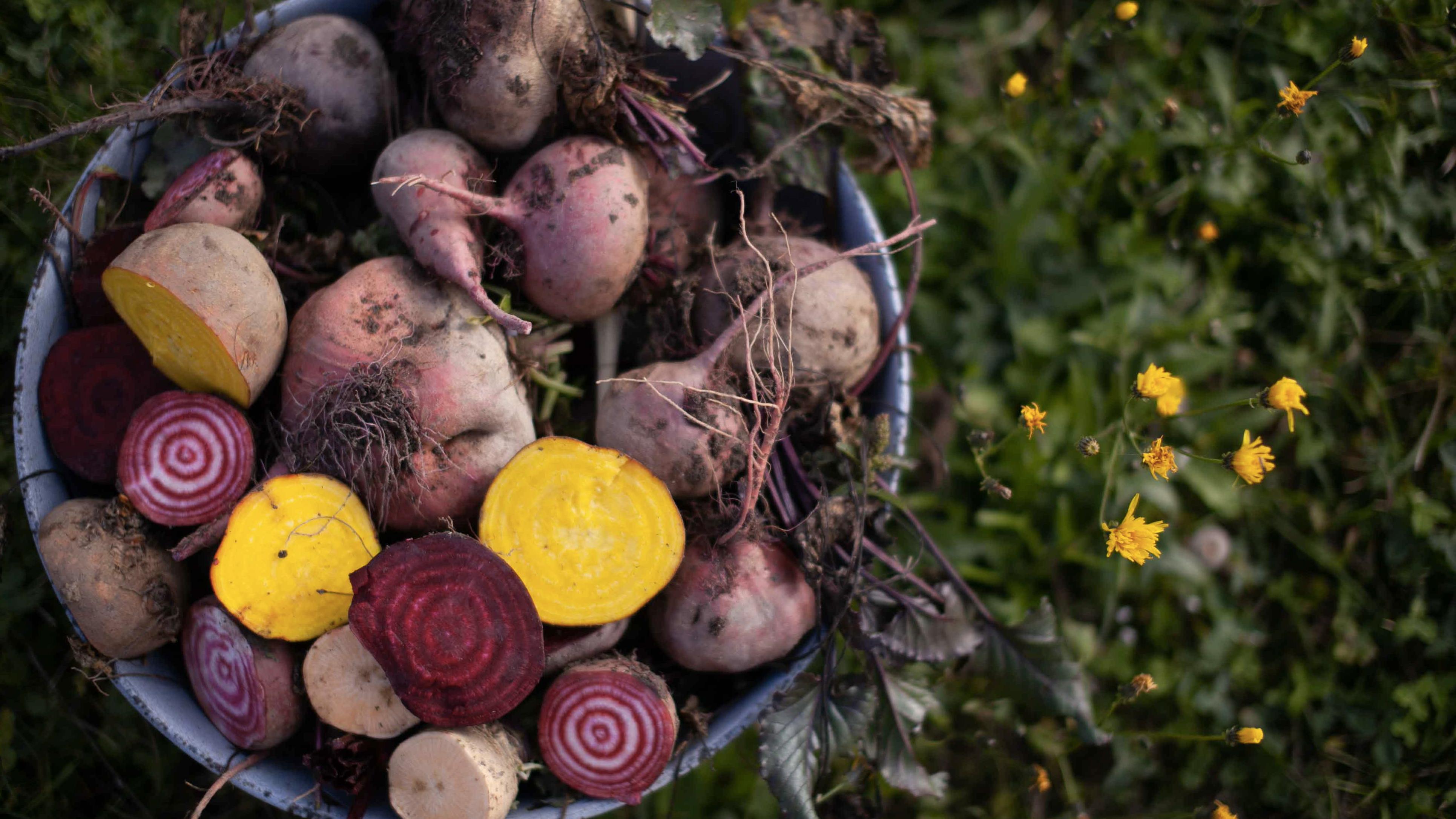 Výběr nejchutnější odrůd řep