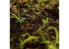 Organické osivo