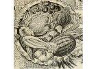 Nejstarší odrůdy