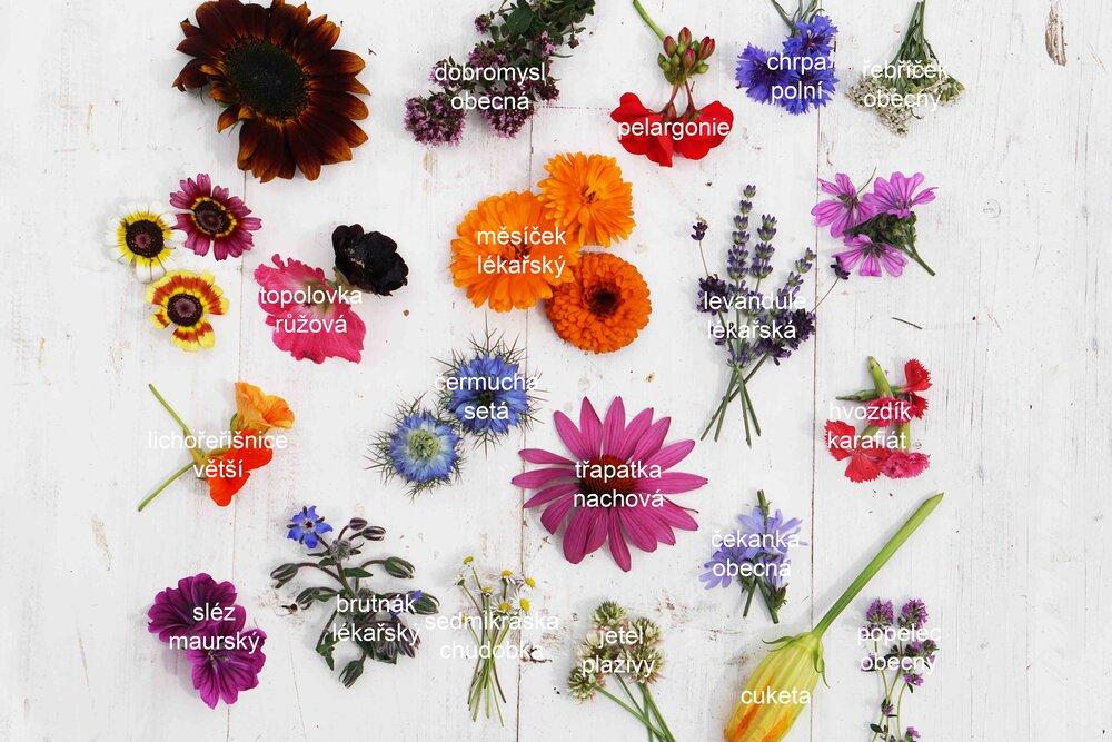poznávačka+květy