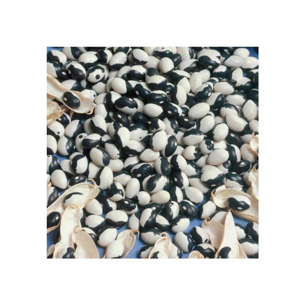 1shell bean dalmatin jpg