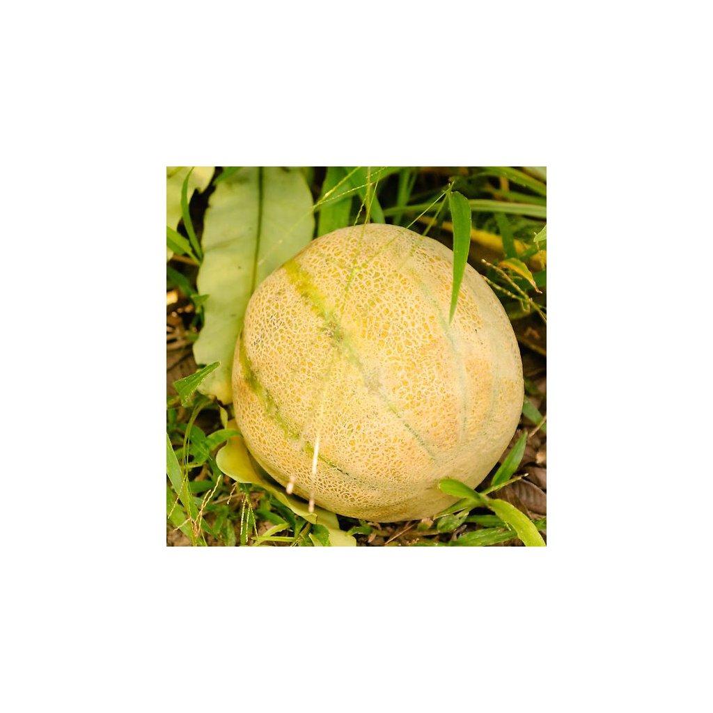 meloun cukrovy charentais 1
