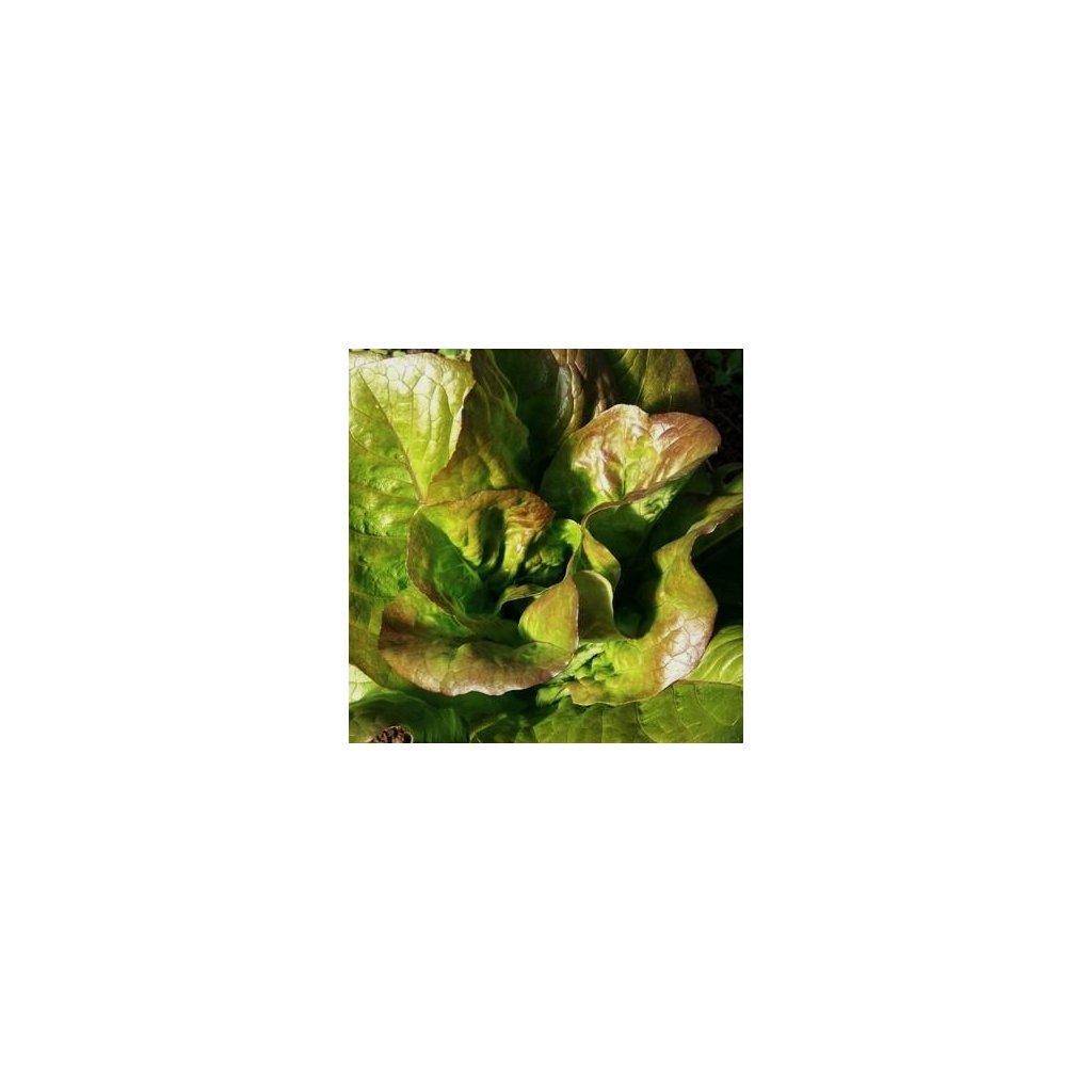 Salát červený Zimní brunet