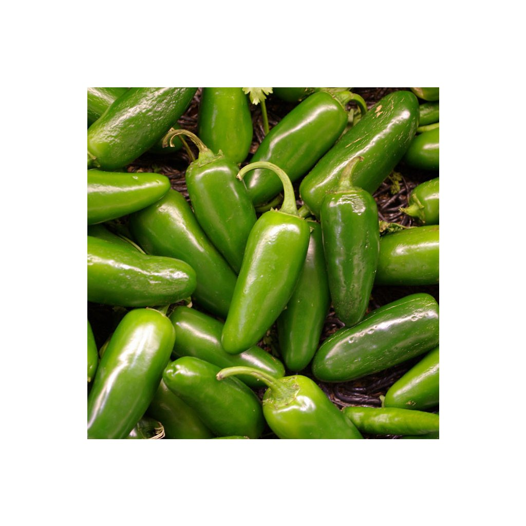 Jalapeno pepper green gigant