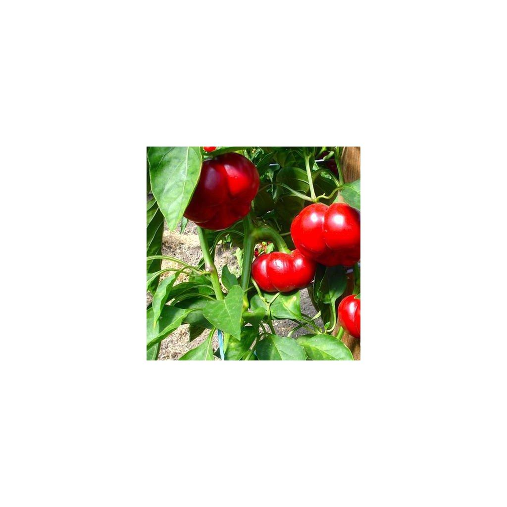pa014 paradeisfruechtig fruehrot web 600