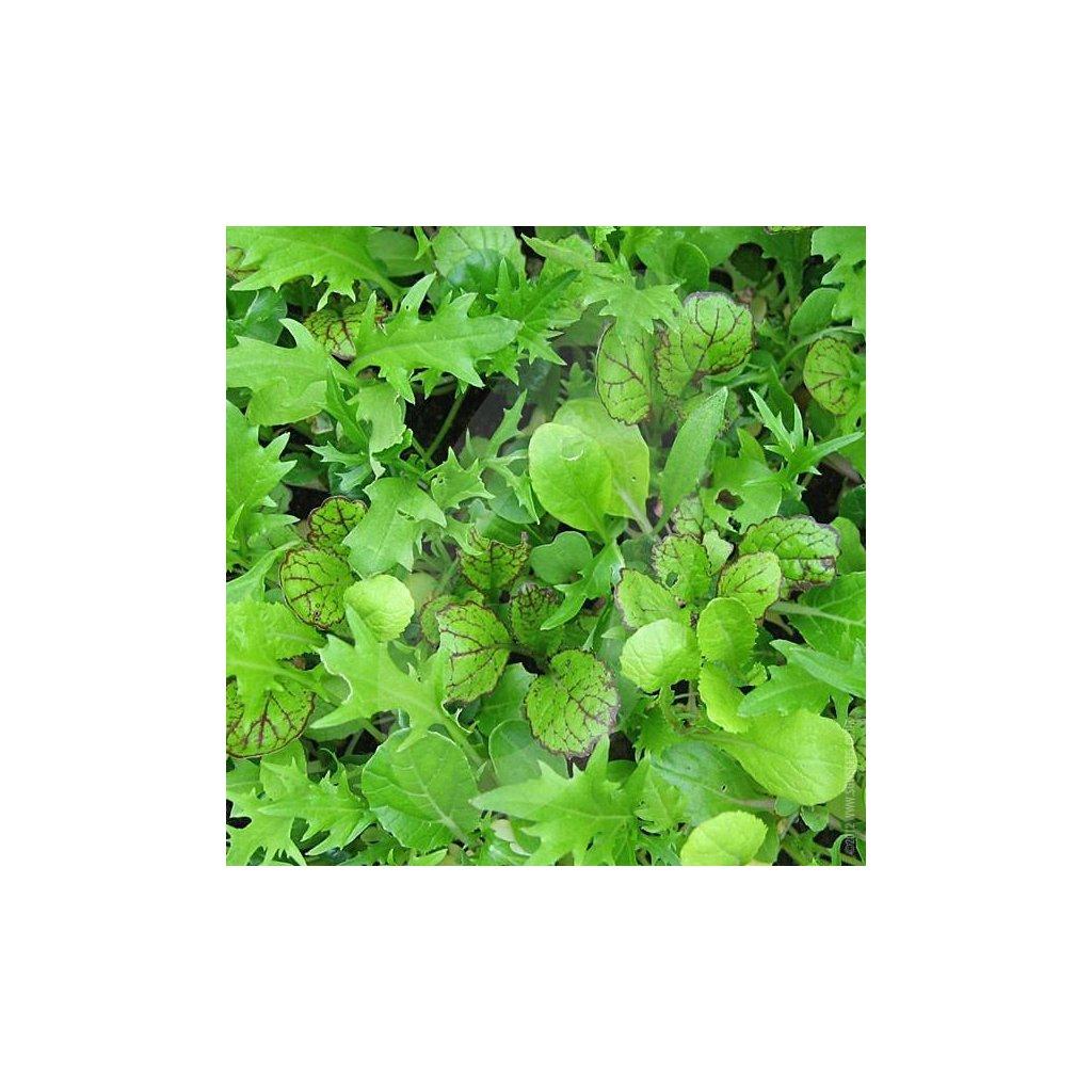 Salad Leaves Oriental Mix 88211 grande