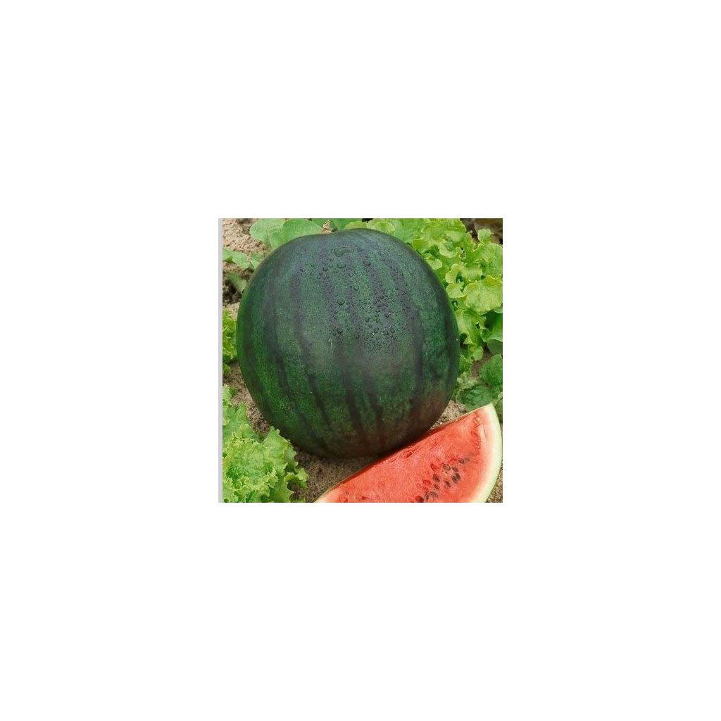 meloun vodni 1
