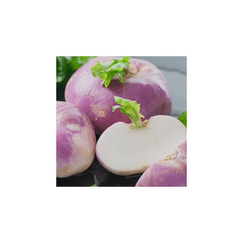vodnice purple top milan