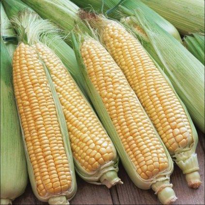 Kukuřice Golden Bantam 12ti řadá