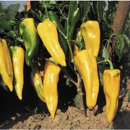 Paprika Corno Di Toro Žlutá