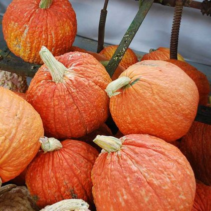 RedWartyThingWinterSquash