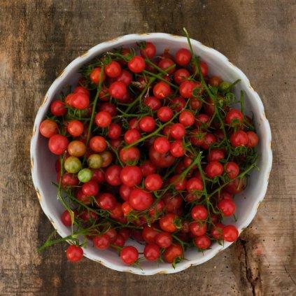 Variace rajčat