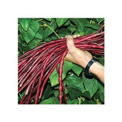 ččervené fazolky