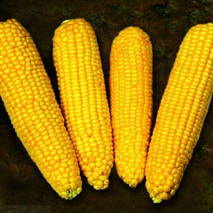 kukuřice true gold