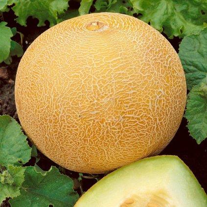meloun cukrovy ananas