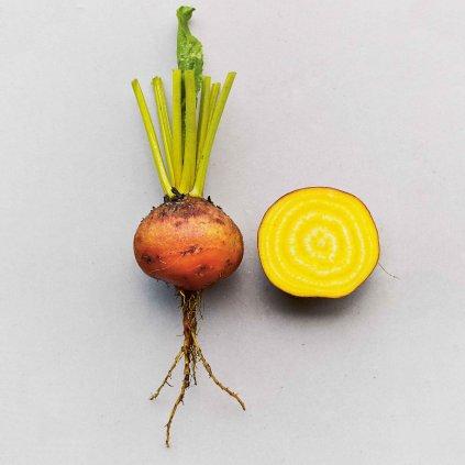 SZ0330 Řepa salátová zlatá Burpees Golden web