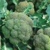 141 brokolice ramoso