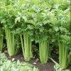 Celer Merlin řapíkatý