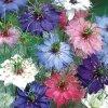 Černucha damask barevný mix