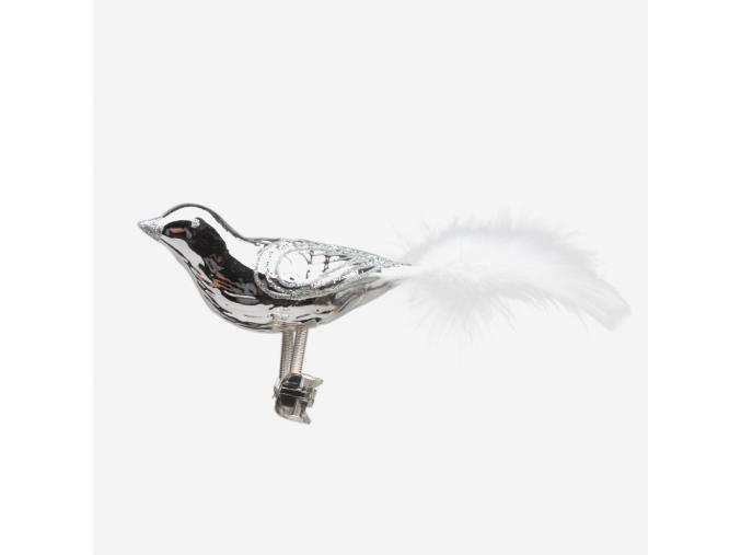Ptáček stříbrný