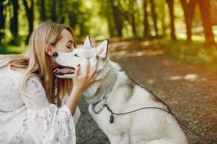 Krmivo pro psy DELIKAN