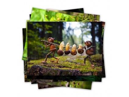 Lesní dubánčí pohlednice