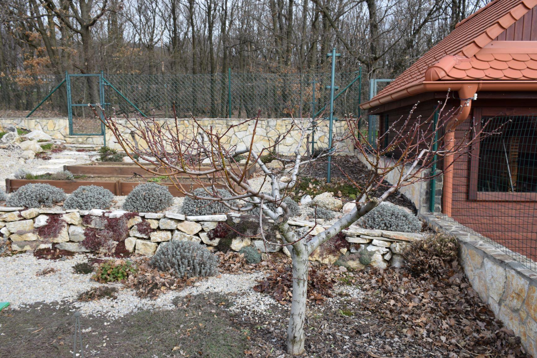 Predjarný postrek proti škodcom v ovocnom sade