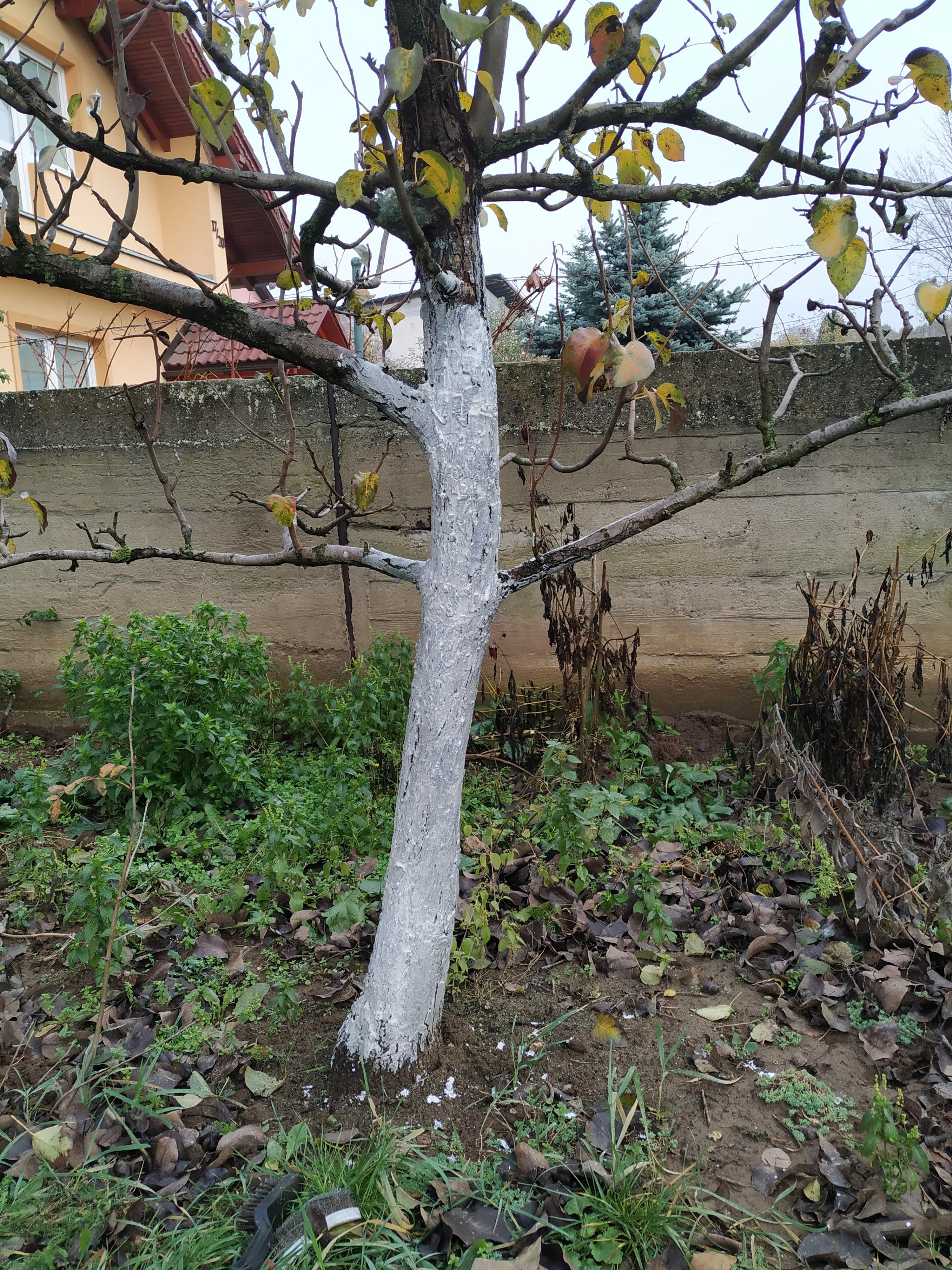 Čo sa ešte dá urobiť v ovocnej záhrade, aby sme znížili nebezpečenstvo od škodcov a chorôb na jar?
