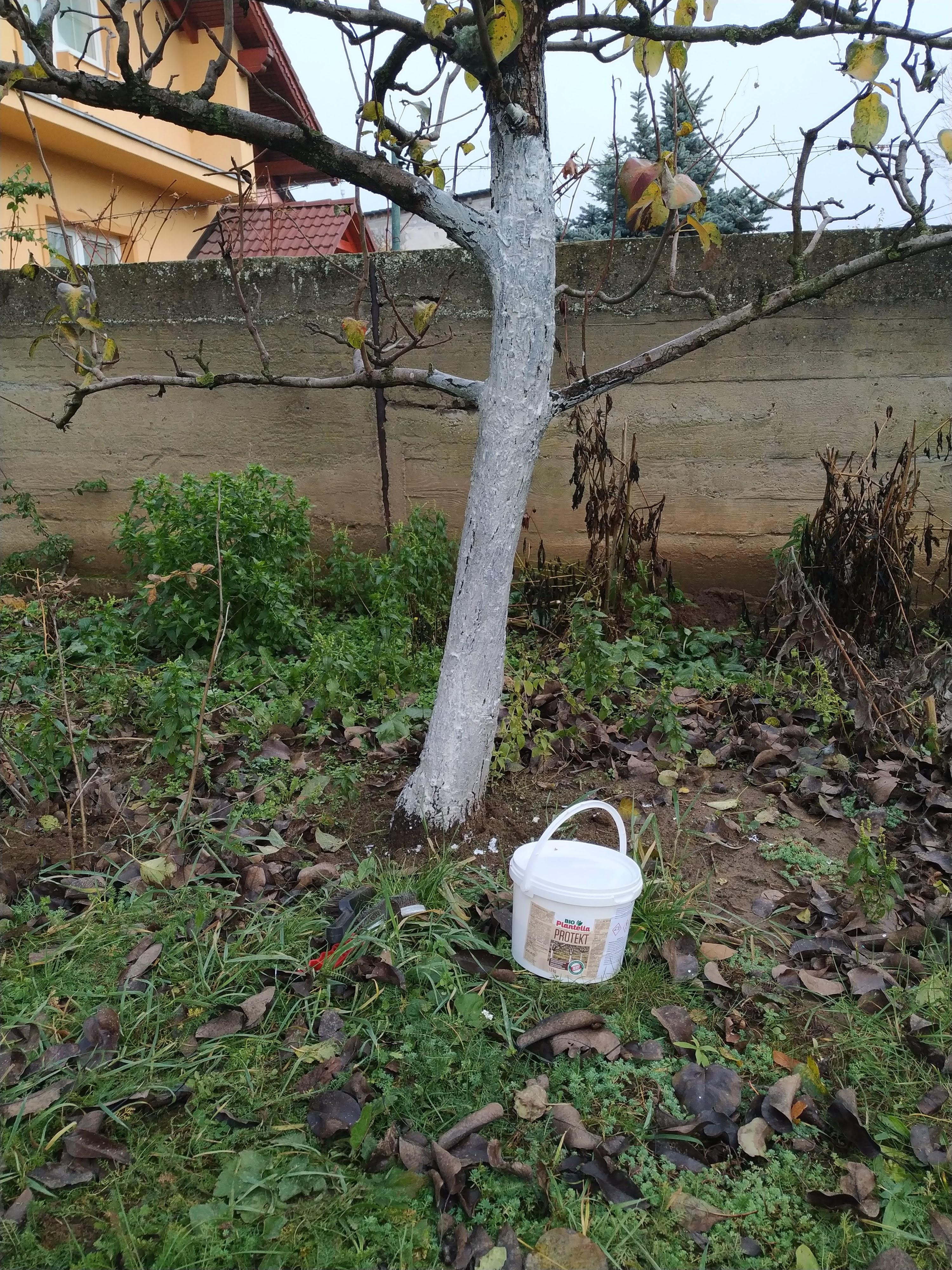 Bielenie stromov