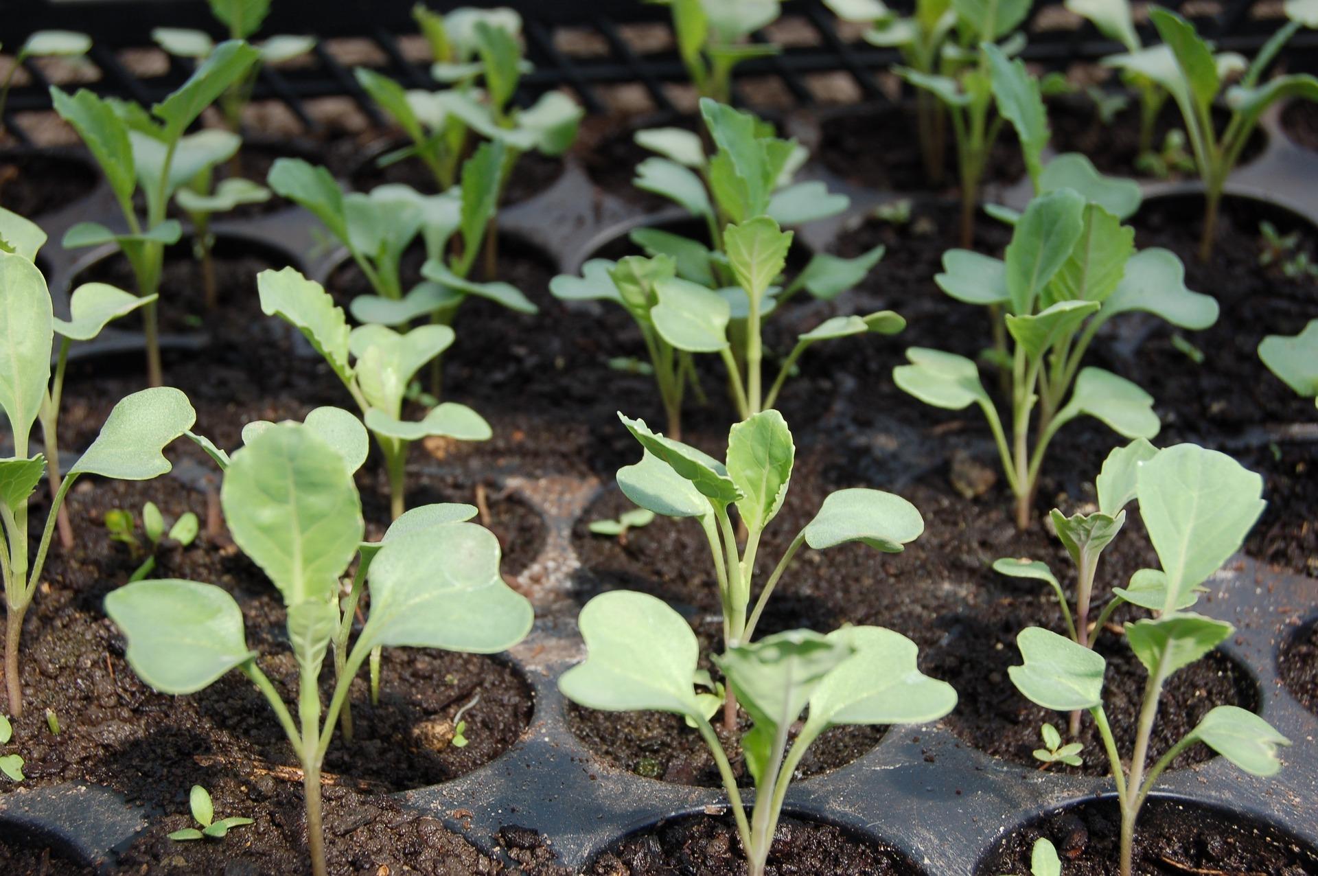 Ochrana proti padaniu klíčiacich rastlín