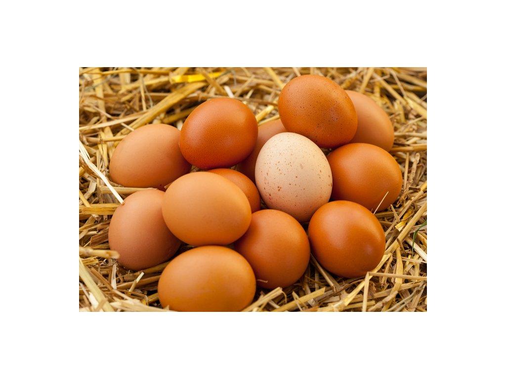 128 180 czech free run eggs size l