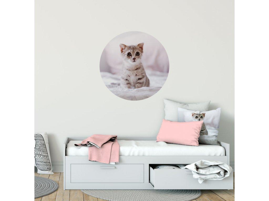 Samolepicí dekorace na stěnu - Koťátko přemístitelný kruh