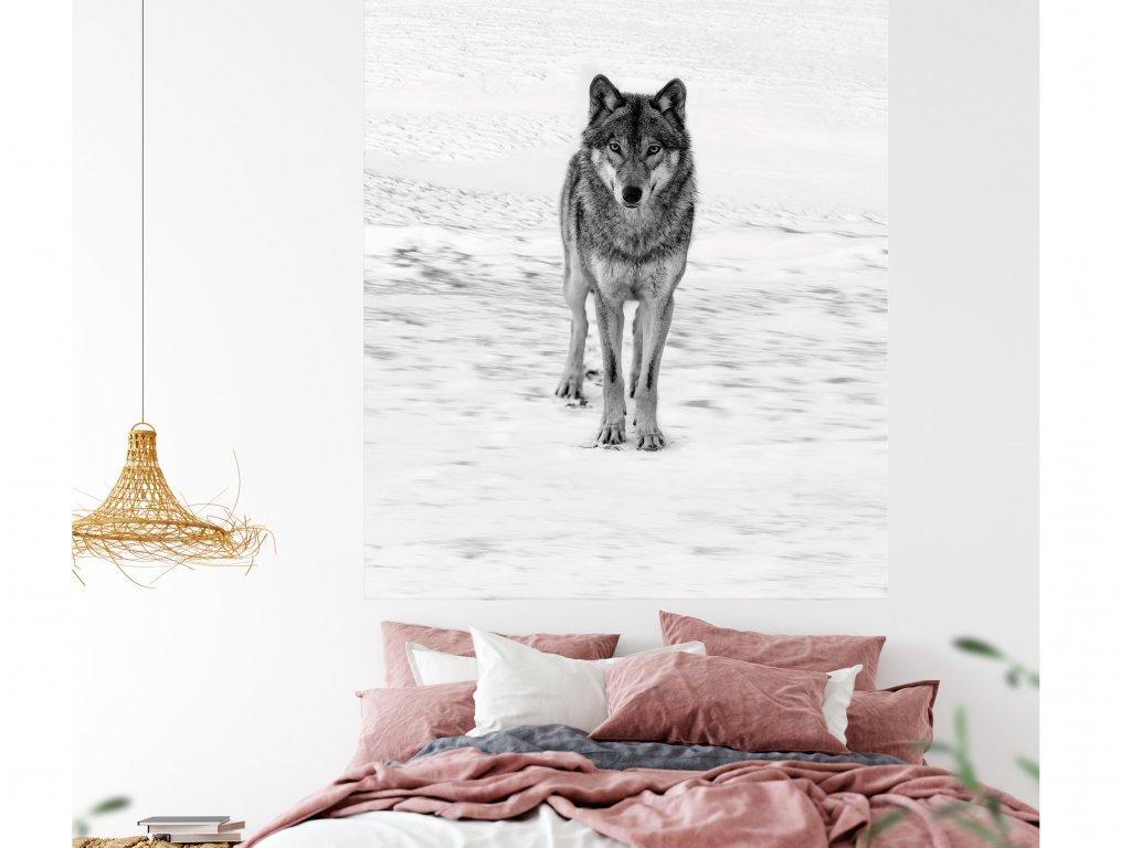 samolepici plakat vlk na zdi v teenage pokoji