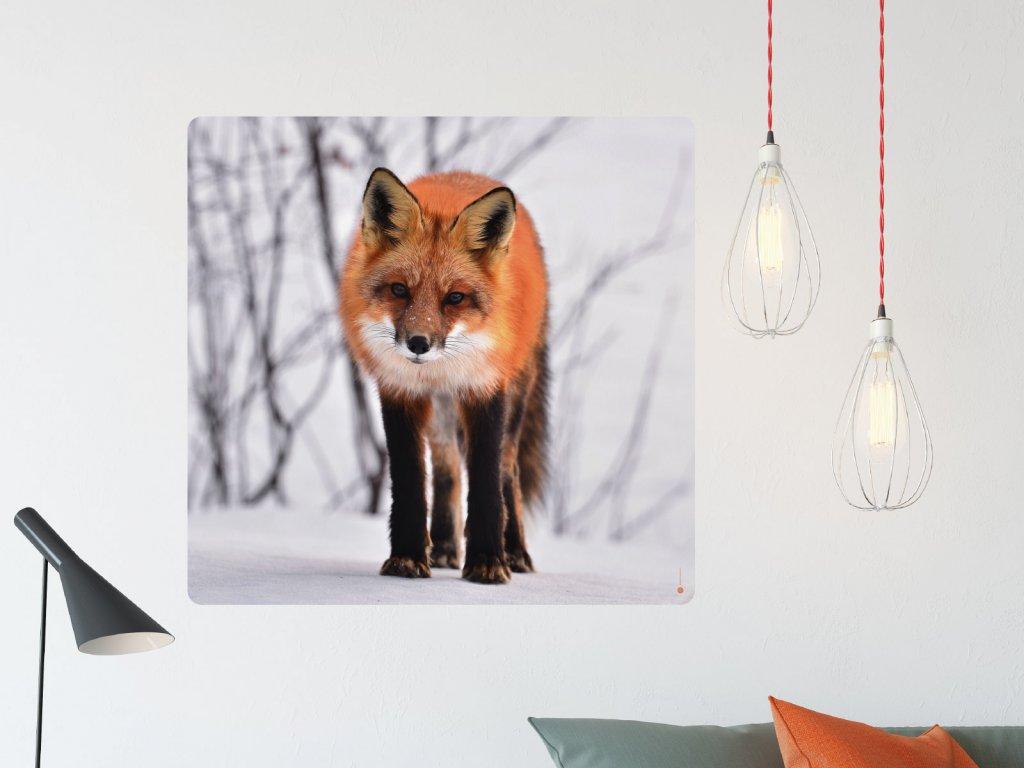 liska samolepici tisk na zed interier