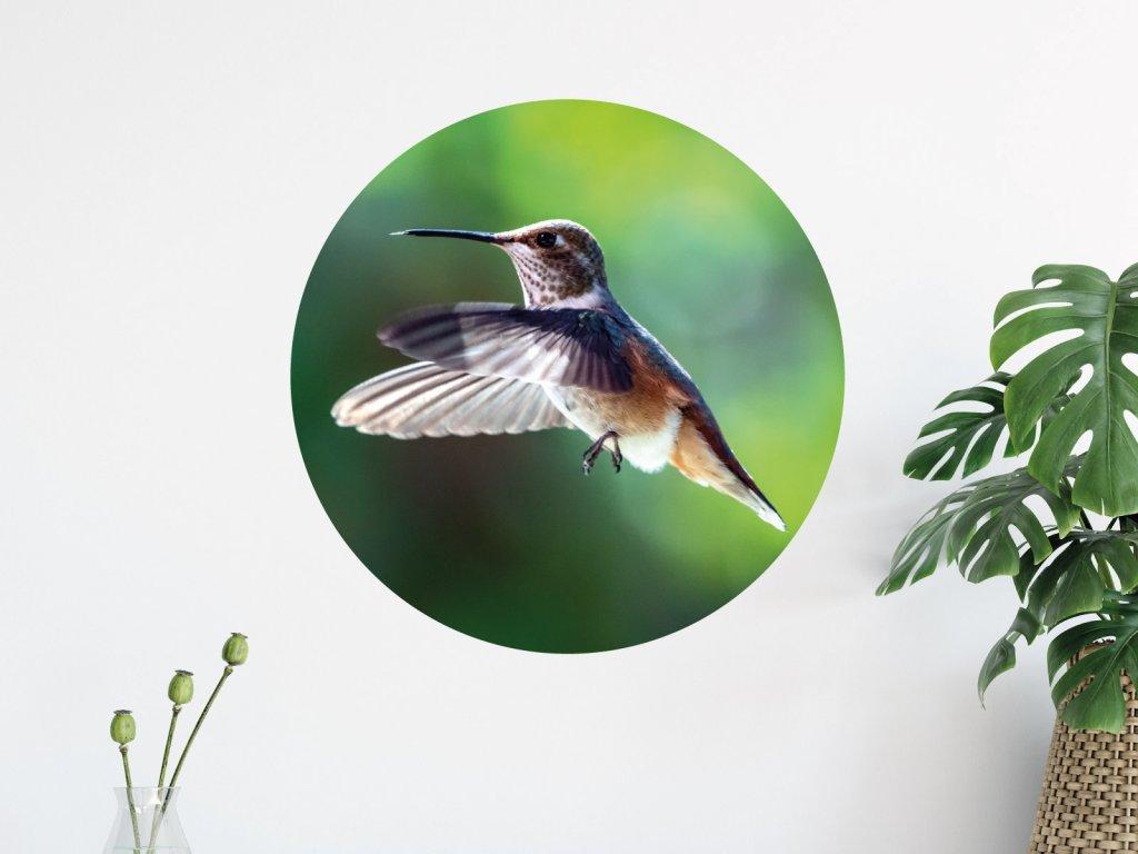 kolibrik samolepka na zed premistitelna interier