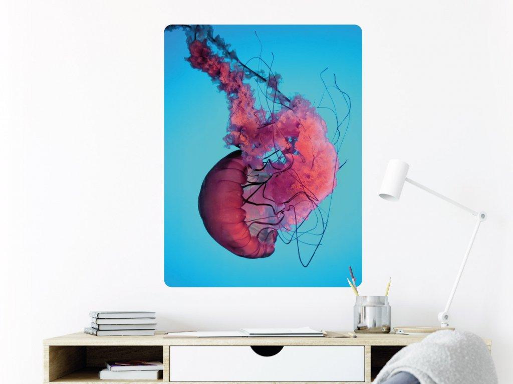 meduza kvet plakat samolepici interier